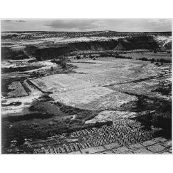Corn Field 1941