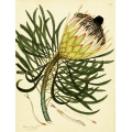 Botanical - Vintage