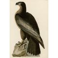Bird of Washington