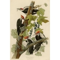Vintage Bird Illustrations