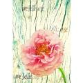 Une Belle Rose 5