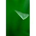 Abstract Leaf Tip