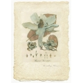 Magnolia II - Limited Edition Print
