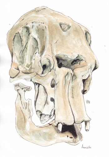 Elephant Skull - workART Prints and Picture Frames