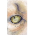 Mistys Eye