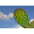 Lone Cactus