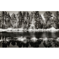 Infrared Reflection