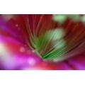 Red Flower Macro 6