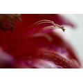 Red Flower Macro 4
