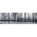 Snowy Trees Wide