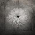 Cherene Flower 2