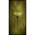 Cherene Flower 6