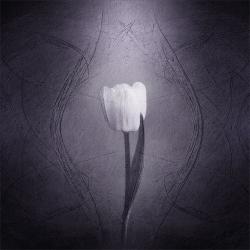 Textured Flower1