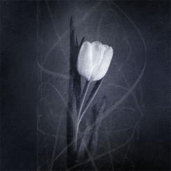 Textured Flower2