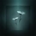 Textured Flower3
