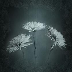 Textured Flower4