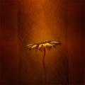 Textured Flower9
