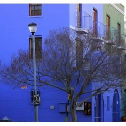 Blue House 461