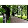 Pavlovsk Trees