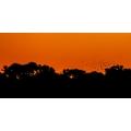 Maun Sunset