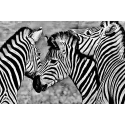 Group of Zebras (60x90)