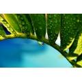 Rain Drop on Palm Leaf