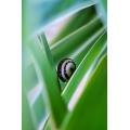 Snail on Yucca Leaf