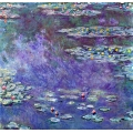 Water Lilies 9