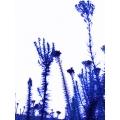 Blue Flowers 2