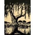 Wilgerboom in die Somer
