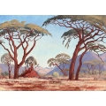 Bushveld Autumn Landscape with Acacia Trees