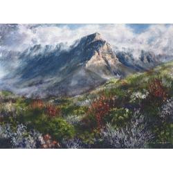 Table Mountain Fynbos
