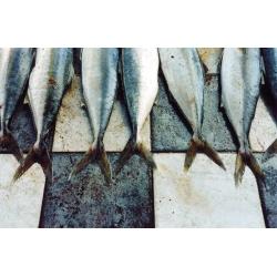 Yellowfin On Tiles