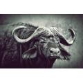 Buffalo Silver