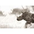 Baby Rhino Head on