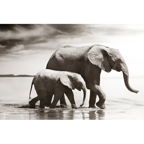 Elephant and Calf - wo...