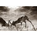 Wildlife Photography - Black and White