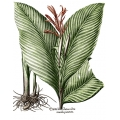 New Vintage Botanicals Roomset 4 Canna