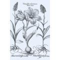 New Vintage Botanicals