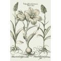 New Vintage Botanicals Roomset 1a - Green
