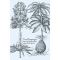 New Vintage Botanicals Roomset 1b - Blue
