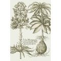 New Vintage Botanicals Roomset 1b - Green