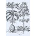 New Vintage Botanicals Roomset 1d - Blue