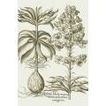 New Vintage Botanicals Roomset 1d - Green