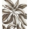 New Vintage Botanicals Roomset 2 Image B