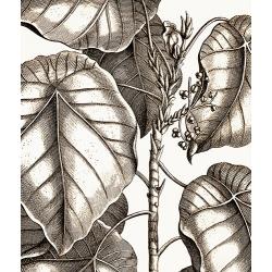 New Vintage Botanicals Roomset 2 Image C
