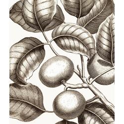 New Vintage Botanicals Roomset 2 Image D