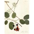 New Vintage Botanicals Roomset 3 Image A