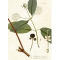 New Vintage Botanicals Roomset 3 Image B