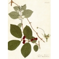 New Vintage Botanicals Roomset 3 Image C